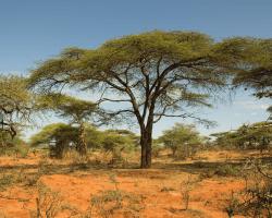 Etiópska krajinka